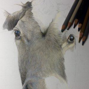 Work in Progress Cow Drawing