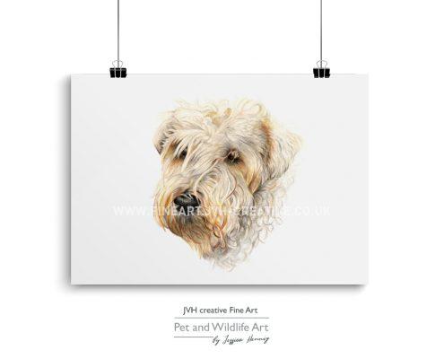 wheaten terrier drawing