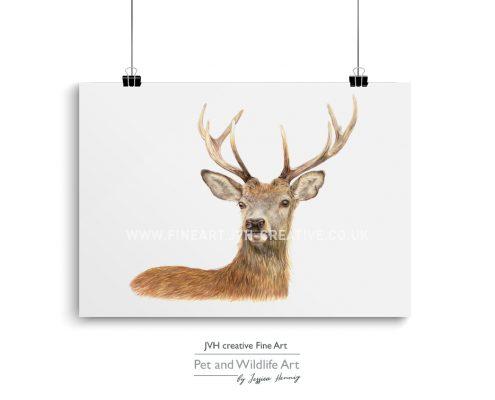 Deer coloured pencil drawing