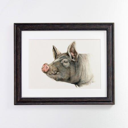 Berkshire Pig black framed