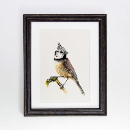 crested tit black framed print