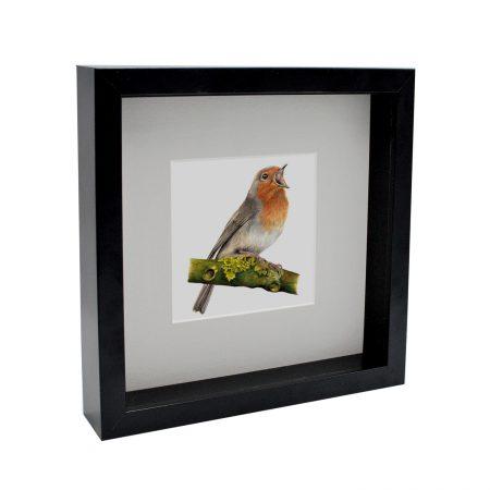Box Framed Robin