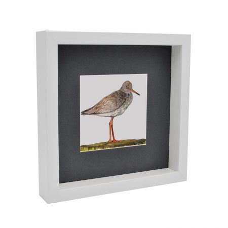 Box Framed Redshank Print