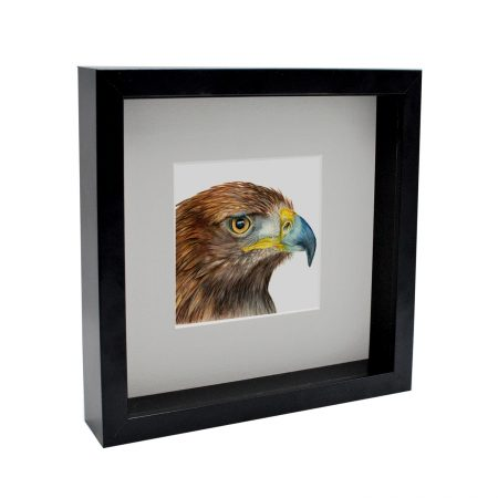 Golden Eagle Box Framed