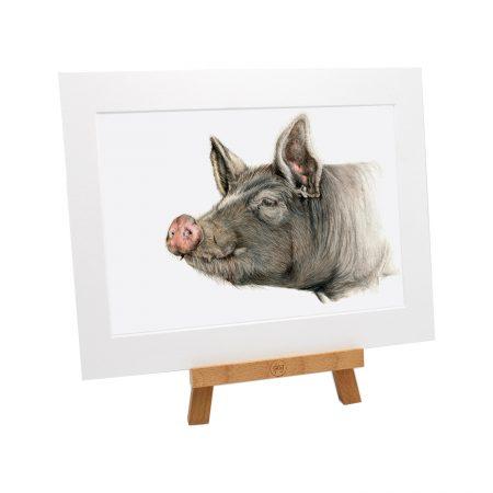 Berkshire Pig Print