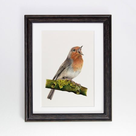 Robin framed black