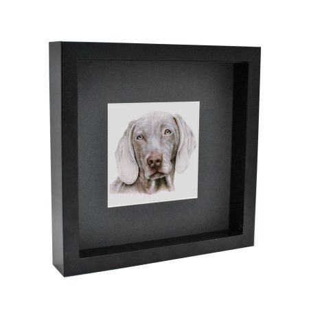 Weimaraner box framed