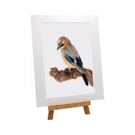 Jay Bird Print
