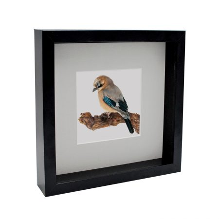 Jay Bird Box Framed
