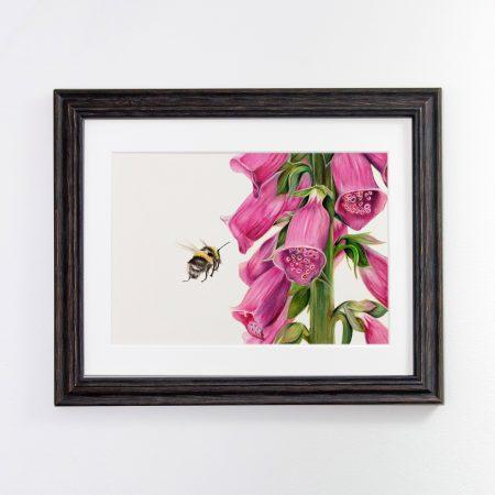 bumblebee and Foxglove black framed