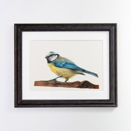 Blue Tit black framed