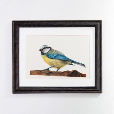 Blue Tit black framed
