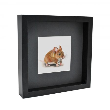 Mouse Box Framed