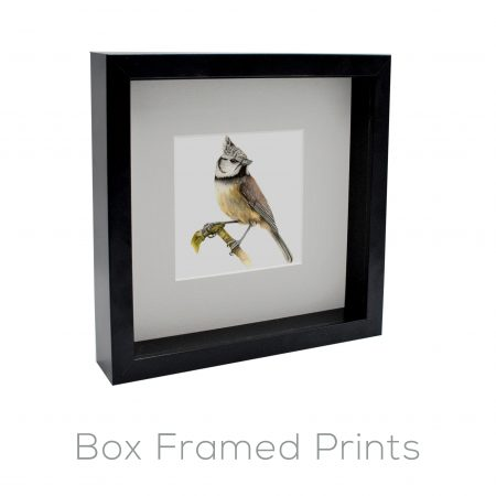 Box Framed / Open Editions