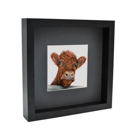 Shorthorn Cow Box Framed Print