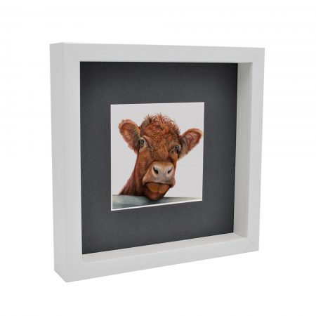 Cow Box framed