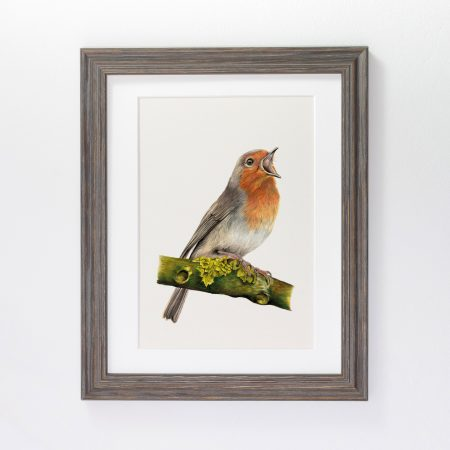 robin Print framed grey
