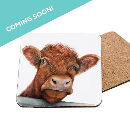 Shorthorn coming Soon