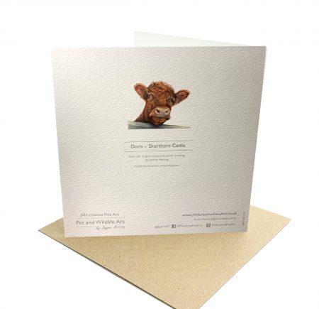 Shorthorn Cattle Card Back