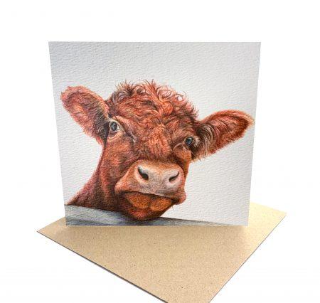 Shorthorn Cattle Card