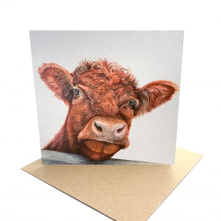 Shorthorn Cattle Card