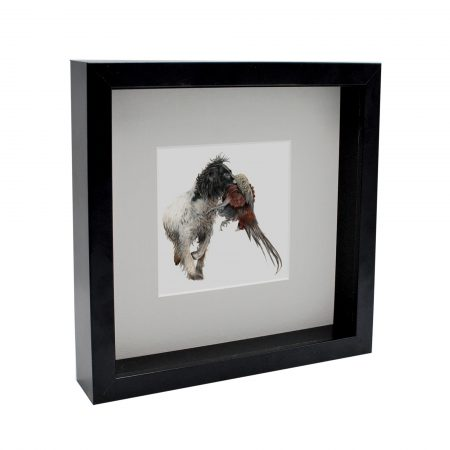 Working Spaniel Box Framed Print