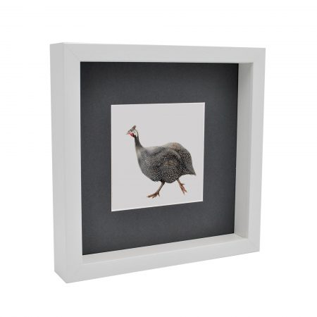 guinea fowl box framed