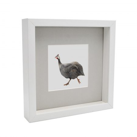 Box Framed Guinea Fowl White frame