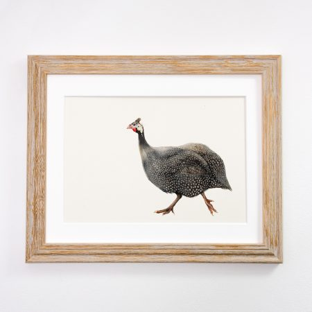 Guniea Fowl light framed