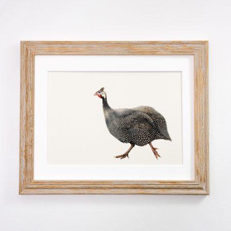 Guniea Fowl light framed