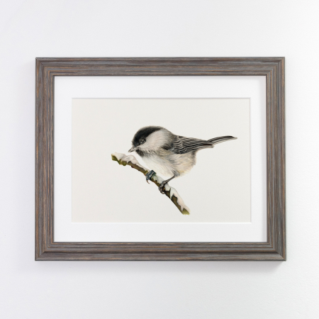 willow tit print grey frame