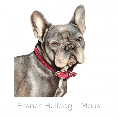 French Bulldog – Maus