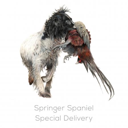 Springer Spaniel – Special Delivery