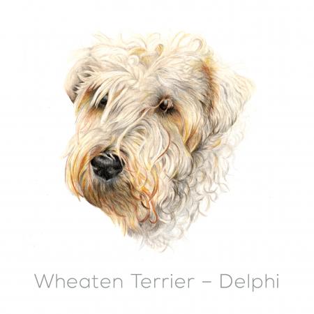 Wheaten – Delphi