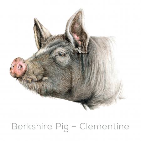 Berkshire – Clementine
