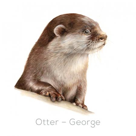 Otter – George