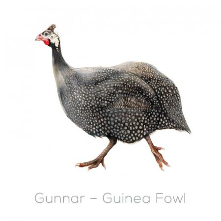 Guinea Fowl – Gunnar