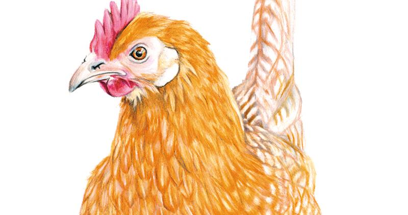 Poulty