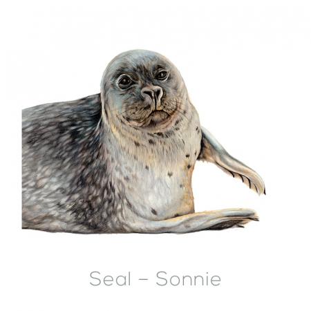 Seal – Sonnie