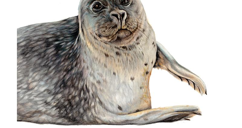 Sonnie Seal