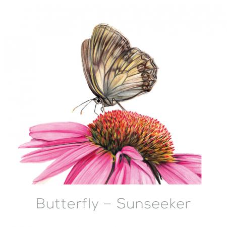 Butterfly – Sunseeker