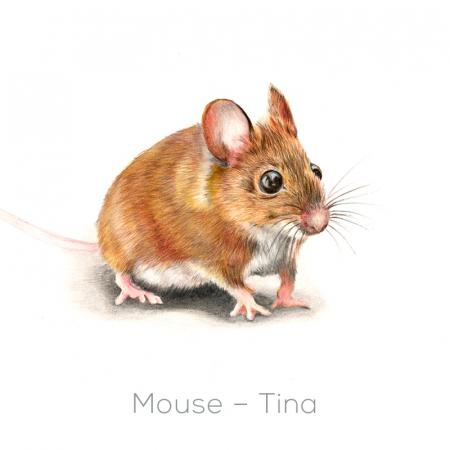 Mouse – Tina